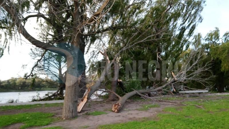 temporal, costanera, arbol caido