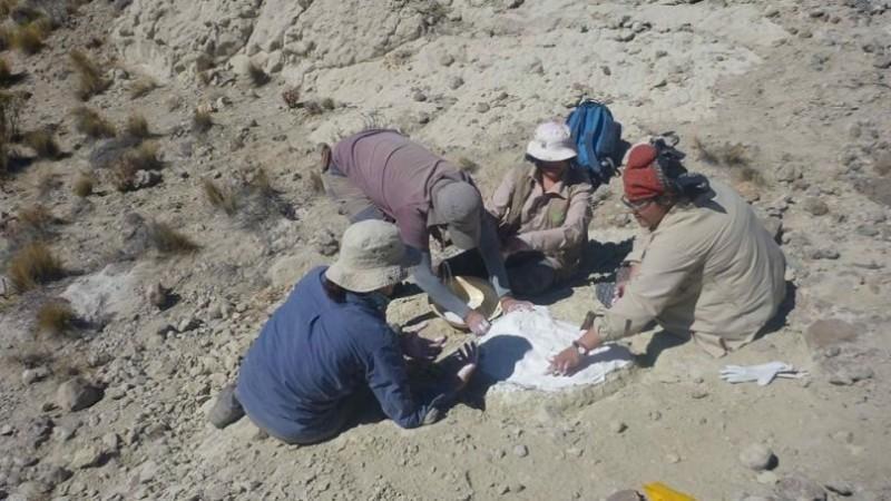 comallo, restos fosiles