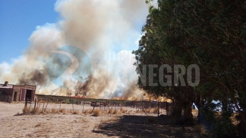 PATAGONES, incendio, campo
