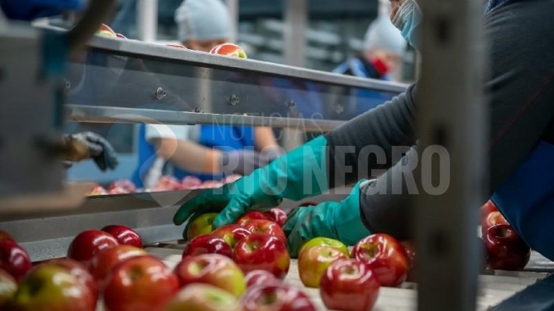 manzanas, fruticultura