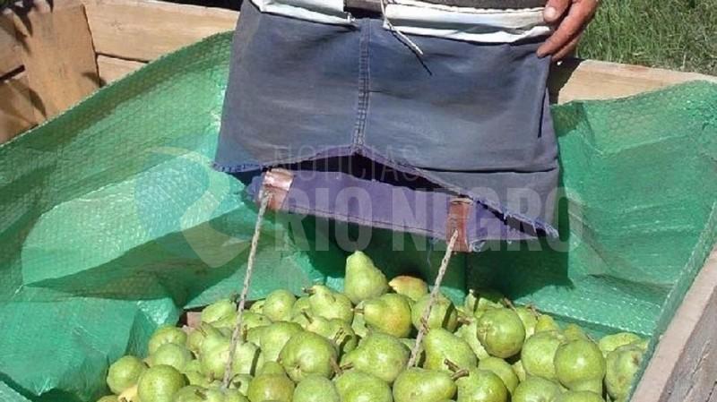 peras, fruticultura