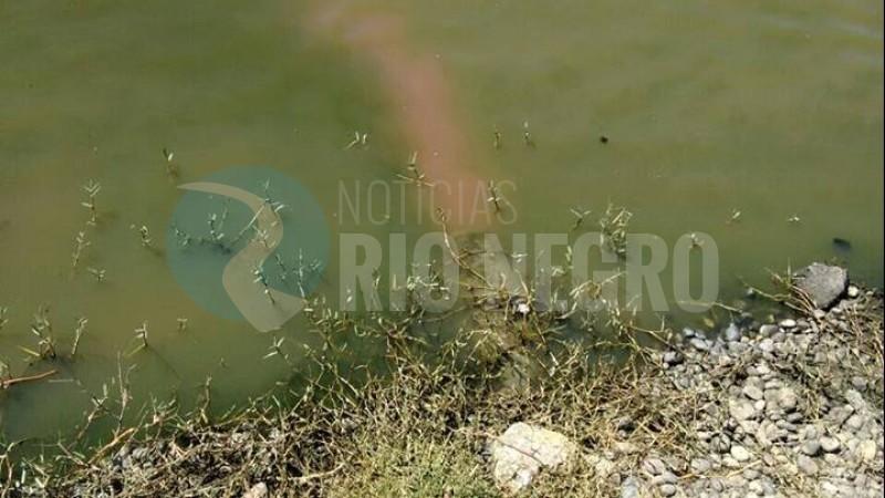 liquidos cloacales, rio negro