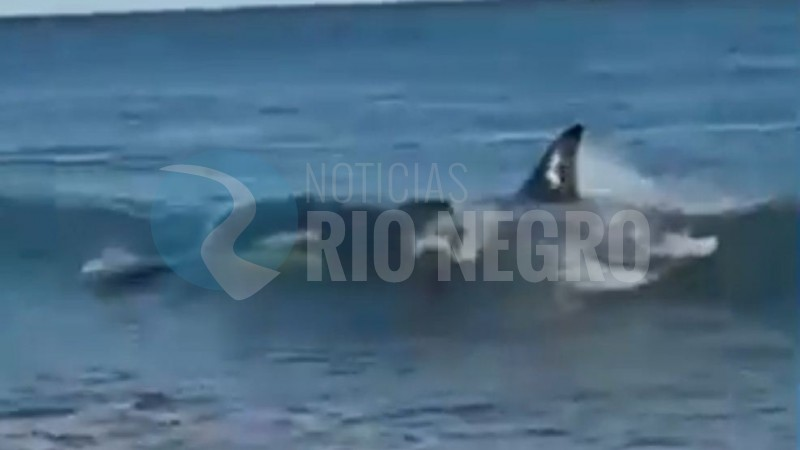 orca, lobo marino, ensenada