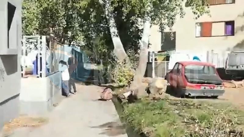 barrio guido