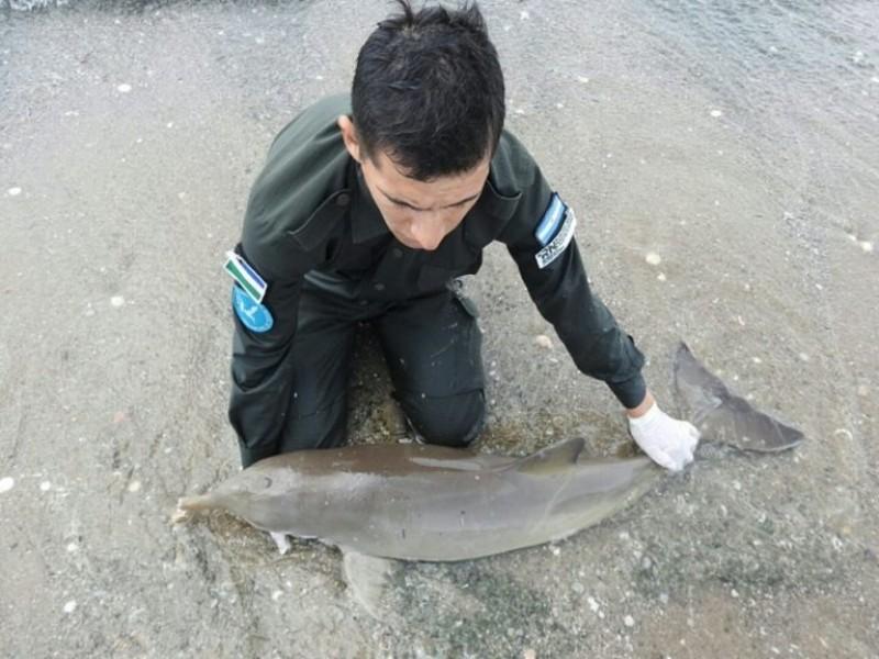 Las Grutas, rescate, delfin