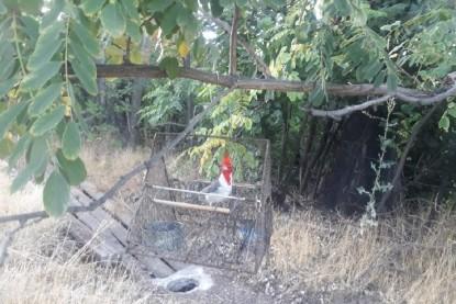 allen, cardenales
