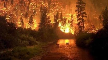 incendio, amazonas