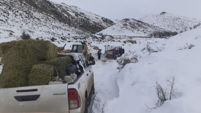defensa civil, nevadas, forraje, region sur