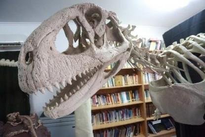 Muestra de Dinosaurios, Las Grutas, Restos oseos
