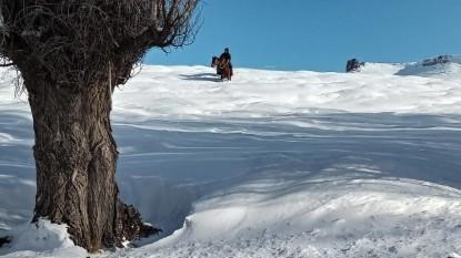 region sur, campo, nevada