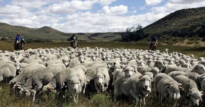 ley ovina