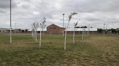 forestacion, plaza, BARRIO LAS FLORES
