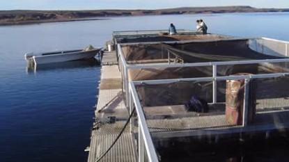 acuicultura