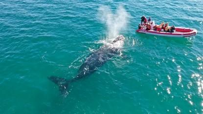 turismo golfo san matias