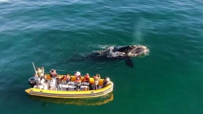 Las Grutas, ballenas