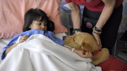 visita mascota hospital