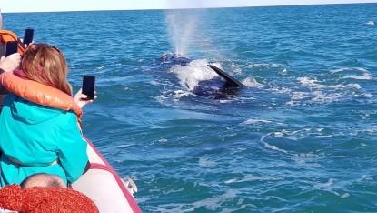 Las Grutas, avistaje fauna marina, ballenas