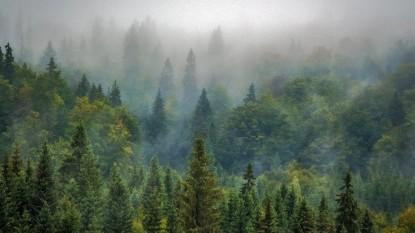 arboles, bosque