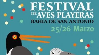 festival, aves playeras