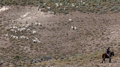 monte ovejas