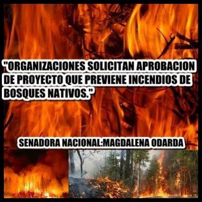 incendios, bosques