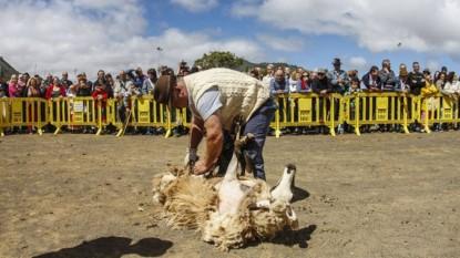 fiesta nacional de la lana, maquinchao