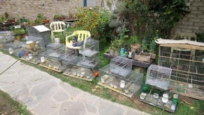aves secuestradas
