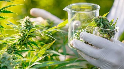 canabis medicinal