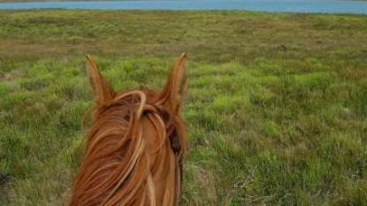 caballo, campo