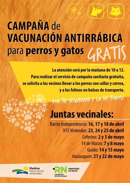 PERROS, gatos, campaña vacunación antirrábica