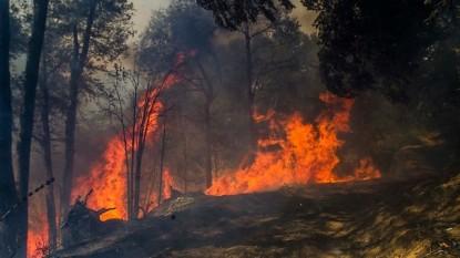 bosque, incendios