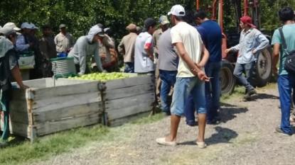 trabajadores golondrinas