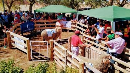 maquinchao, exposicion rural