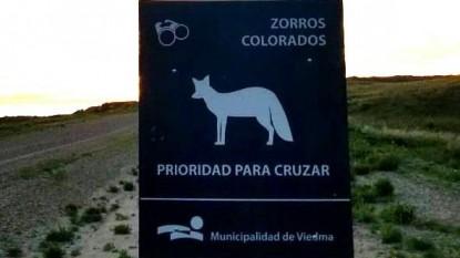 cartel, zorros