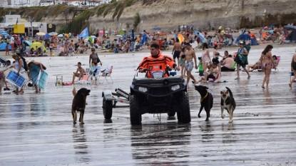 Las Grutas, playa, PERROS