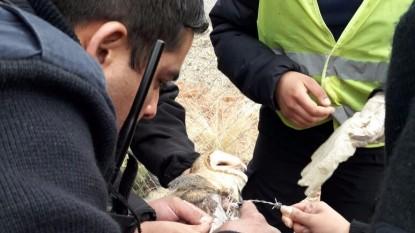 policia lechuza rescatada