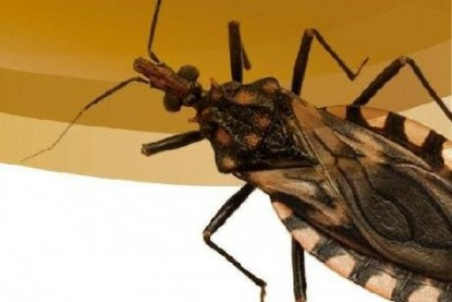 insecto chagas