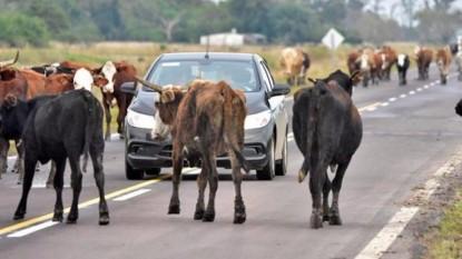 rutas, animales, sueltos