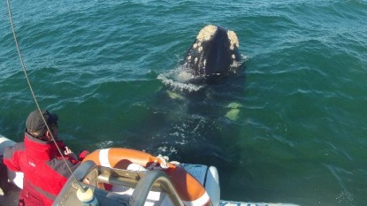 ballena, avistaje fauna marina