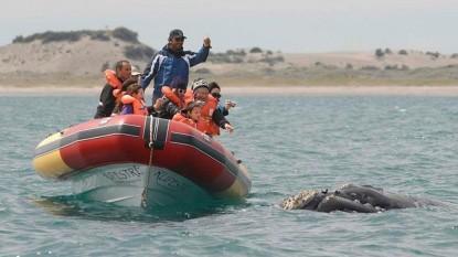 avistaje fauna marina