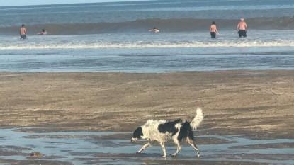 playa, PERROS, mascota