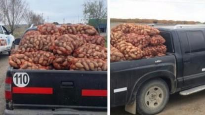 camioneta, PAPA