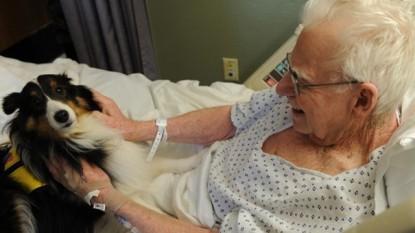 hospitales, mascotas